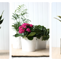 Around here: plants for the home